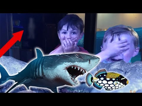 Ghost Spotted at Haunted Aquarium!!! Scary Paranormal Ghost