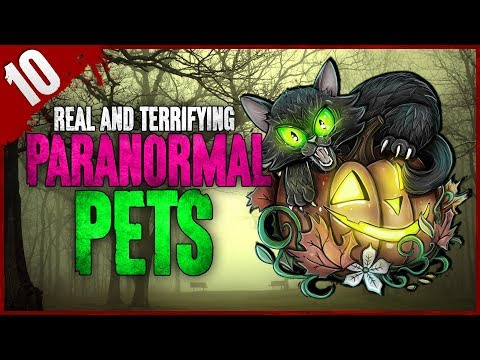 10 REAL Paranormal Pets Stories | Darkness Prevails
