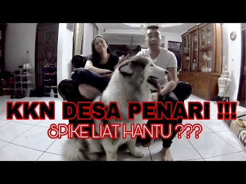 PARANORMAL EXPERIENCE – KKN DESA PENARI ( WITH SPIKE )